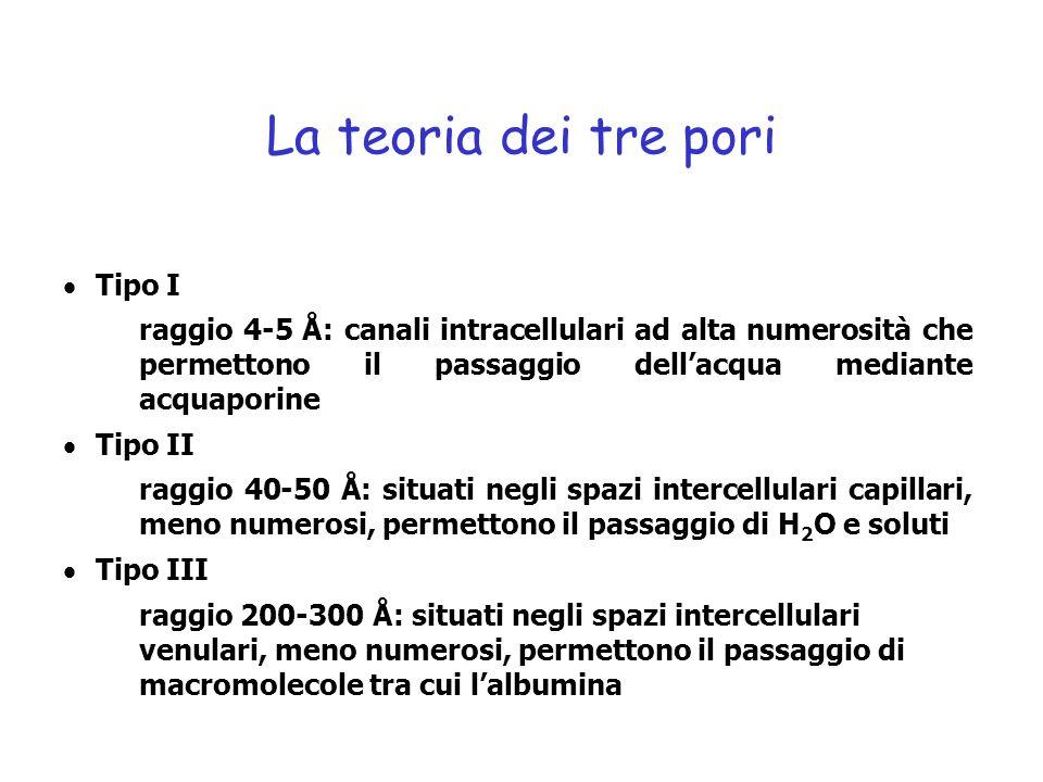 La teoria dei tre pori Tipo I
