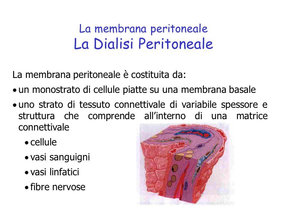 La membrana peritoneale La Dialisi Peritoneale