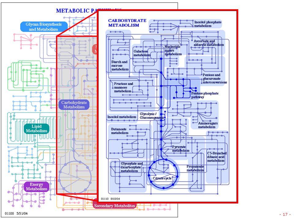 v. 1.5 © gsartor 2001-2011 Metabolismo