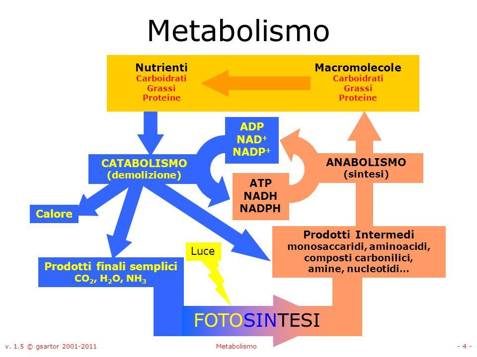 monosaccaridi, aminoacidi, Prodotti finali semplici