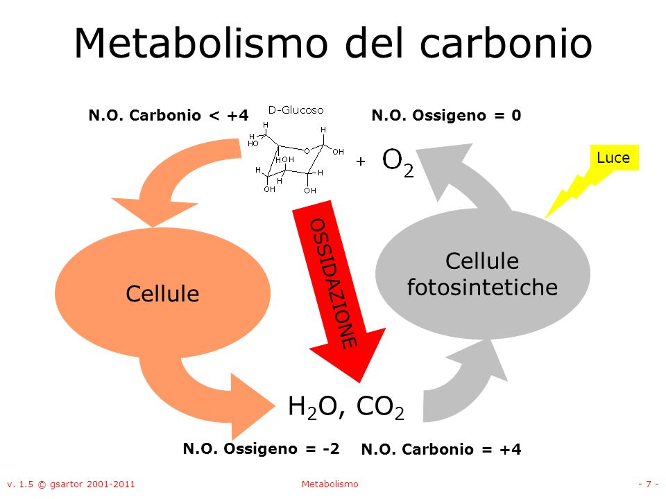 Metabolismo del carbonio