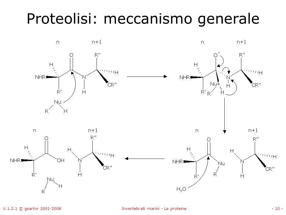 Proteolisi: meccanismo generale