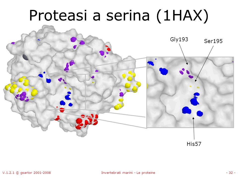 Proteasi a serina (1HAX)