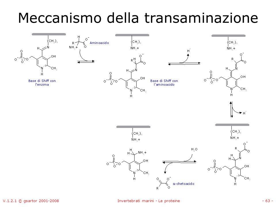 Meccanismo della transaminazione