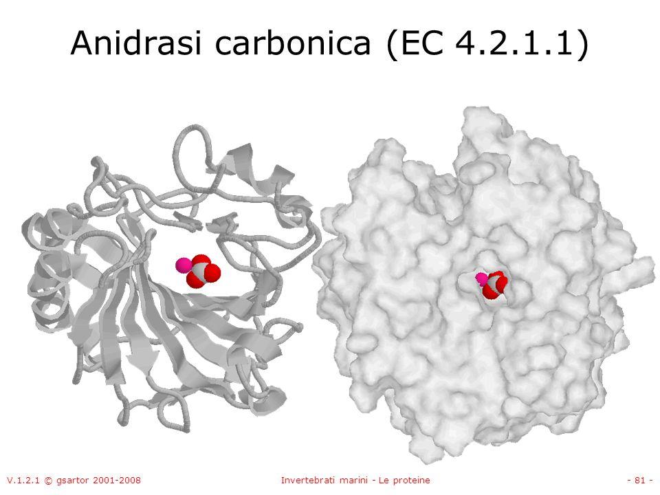 Anidrasi carbonica (EC 4.2.1.1)
