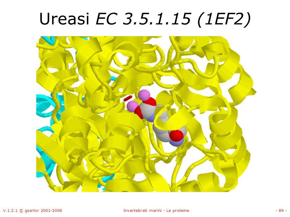 Invertebrati marini - Le proteine