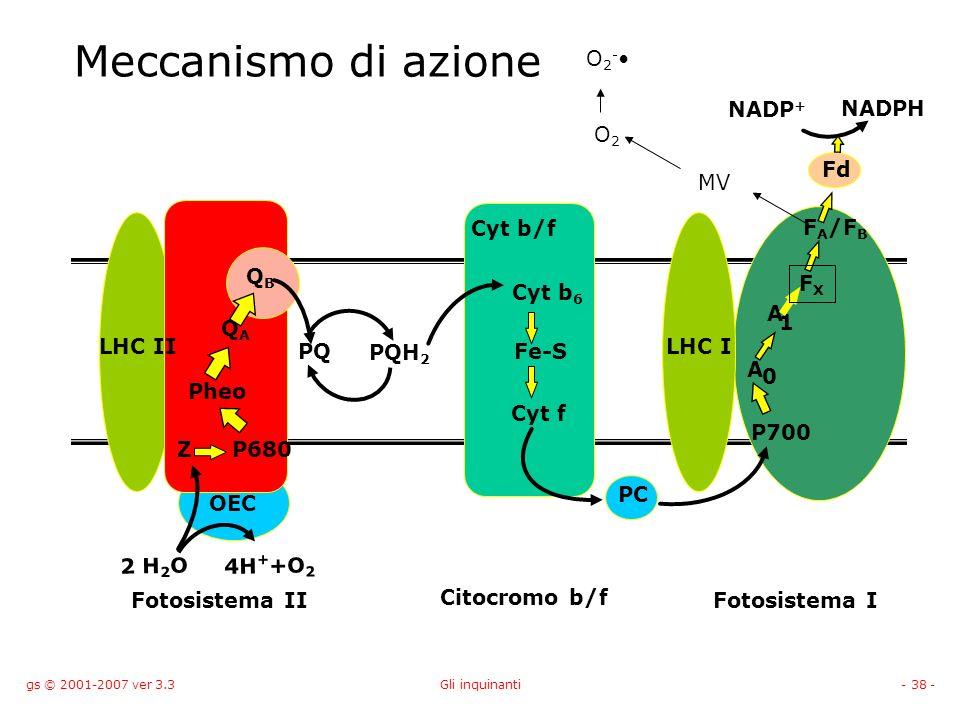 Meccanismo di azione O2-• NADP+ NADPH O2 Fd MV FA/FB Cyt b/f QB FX