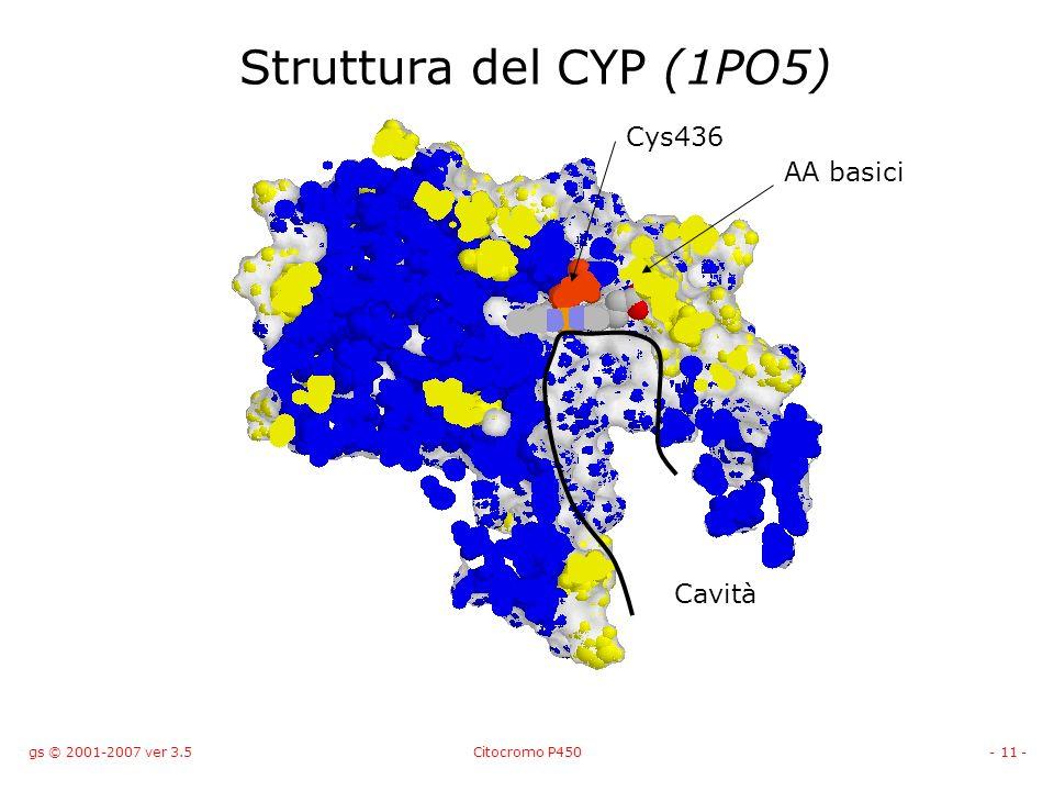Struttura del CYP (1PO5) Cys436 AA basici Cavità