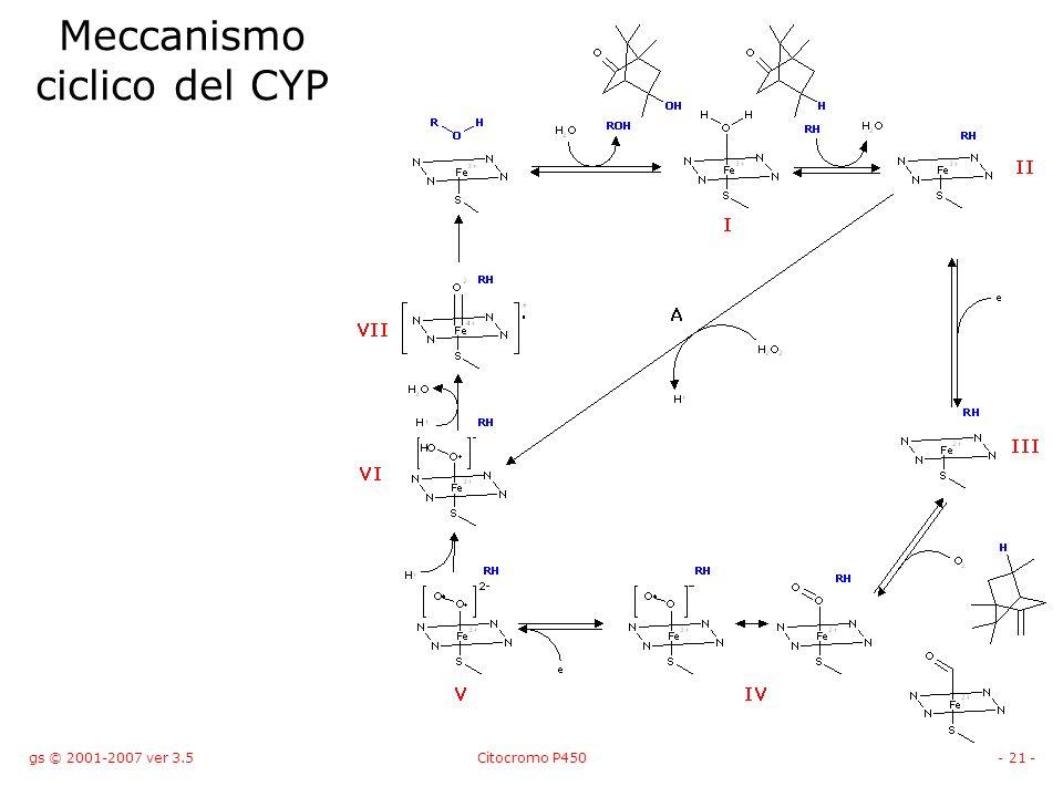 Meccanismo ciclico del CYP