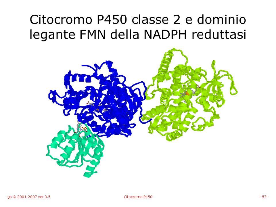 Citocromo P450 classe 2 e dominio legante FMN della NADPH reduttasi