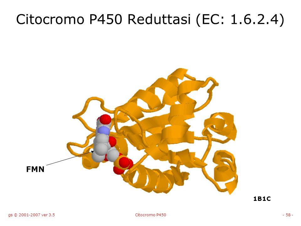 Citocromo P450 Reduttasi (EC: 1.6.2.4)