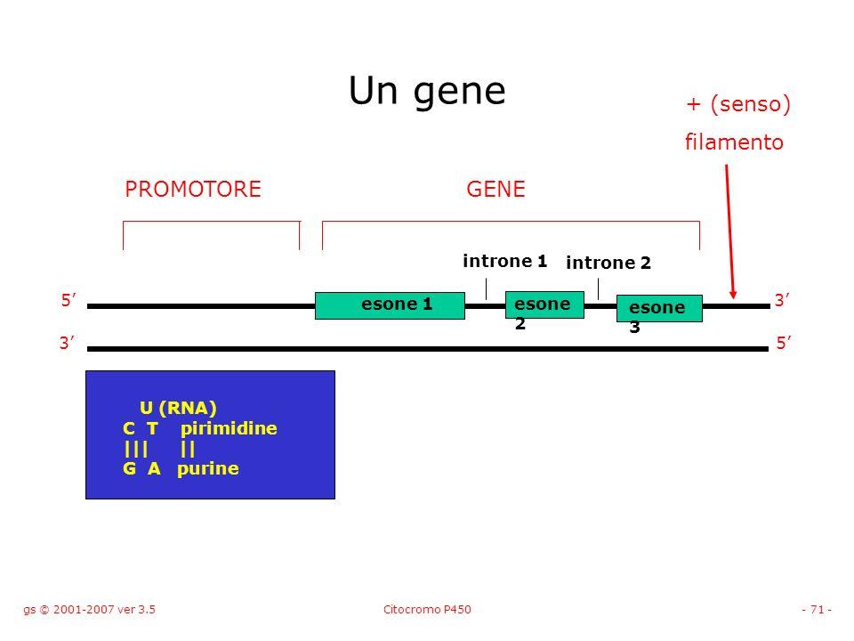 Un gene + (senso) filamento PROMOTORE GENE introne 1 introne 2 5'