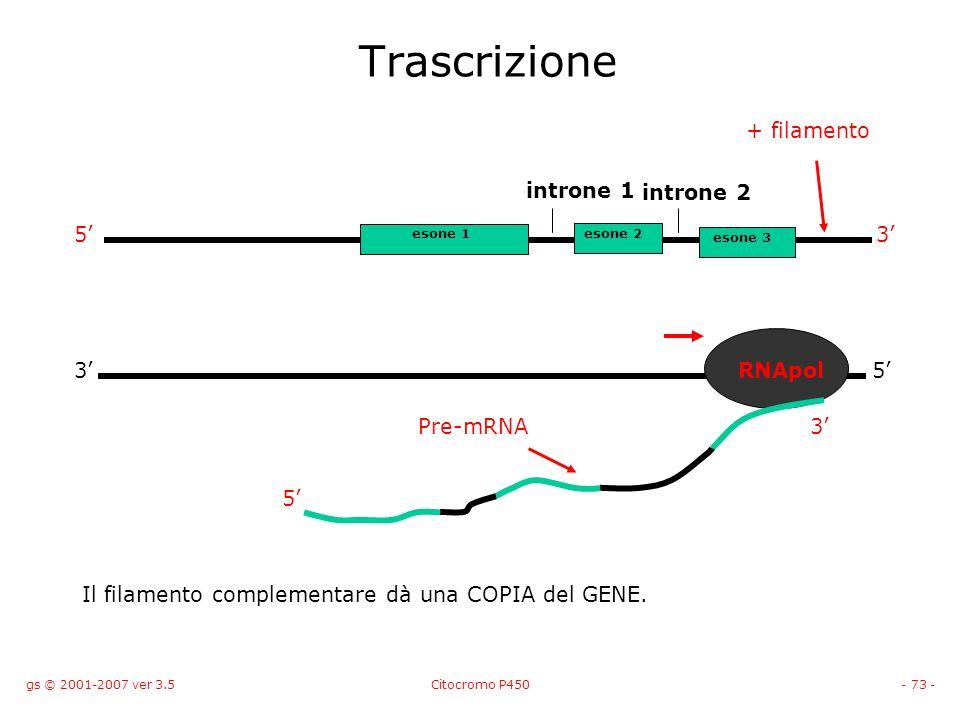 Trascrizione + filamento introne 1 introne 2 5' 3' 3' RNApol 5'