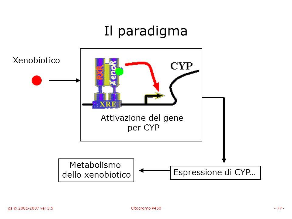 Il paradigma Xenobiotico Attivazione del gene per CYP Metabolismo