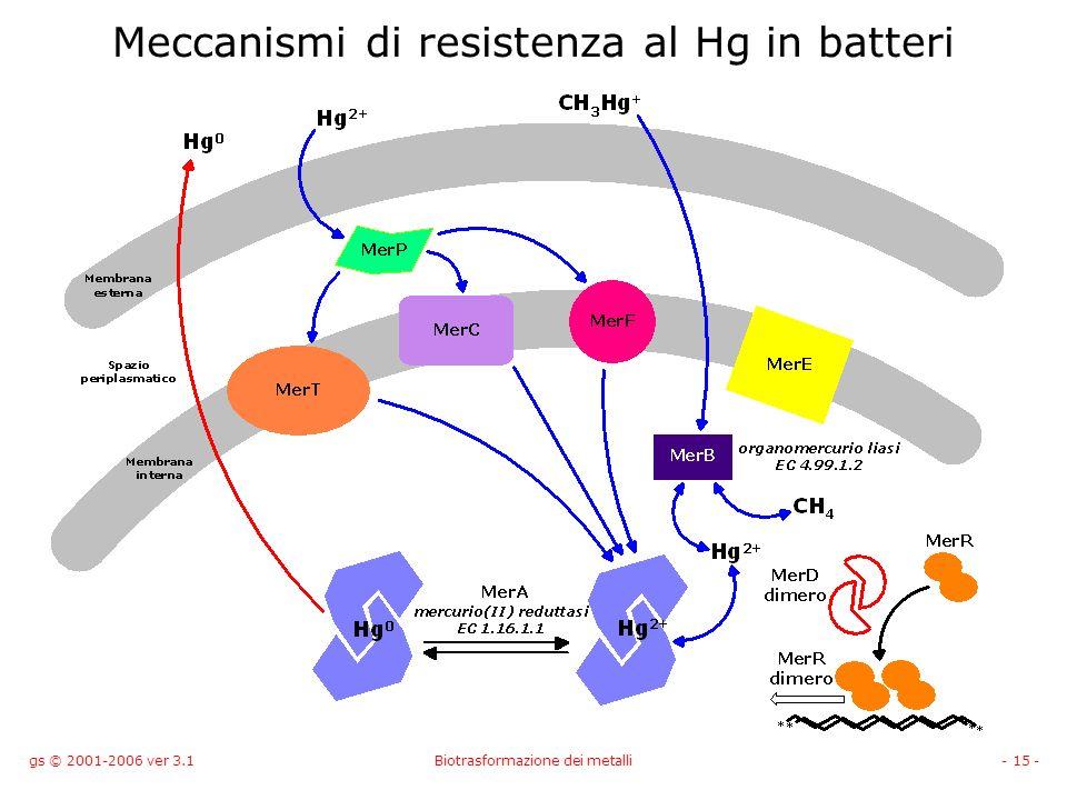 Meccanismi di resistenza al Hg in batteri