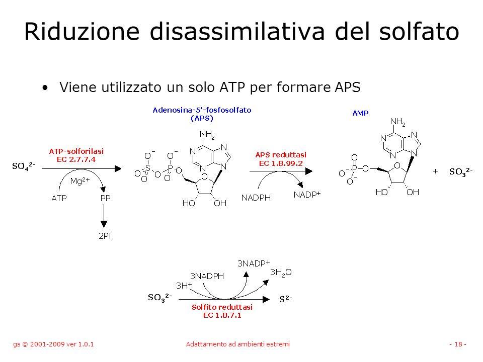 Riduzione disassimilativa del solfato