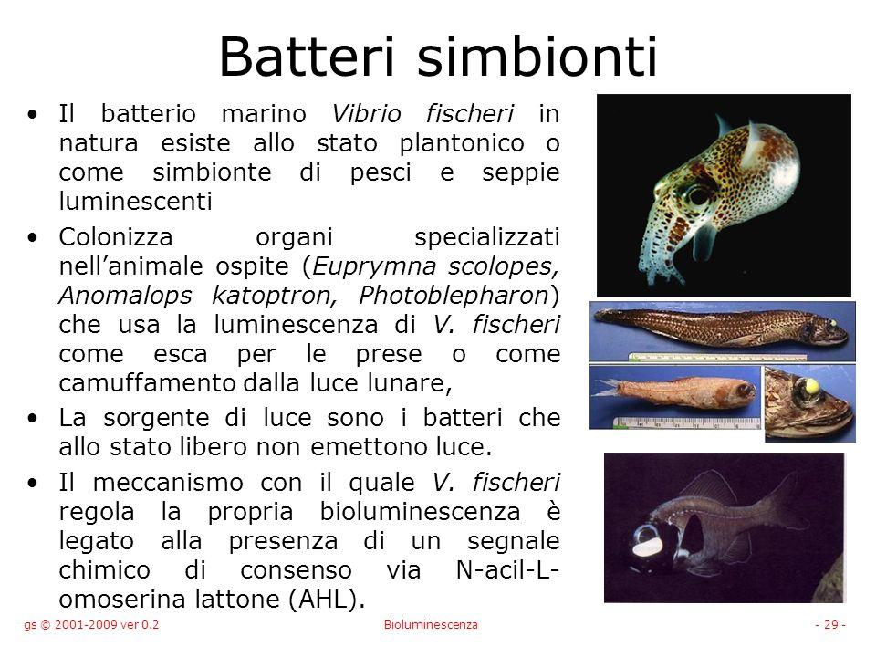Batteri simbionti Il batterio marino Vibrio fischeri in natura esiste allo stato plantonico o come simbionte di pesci e seppie luminescenti.