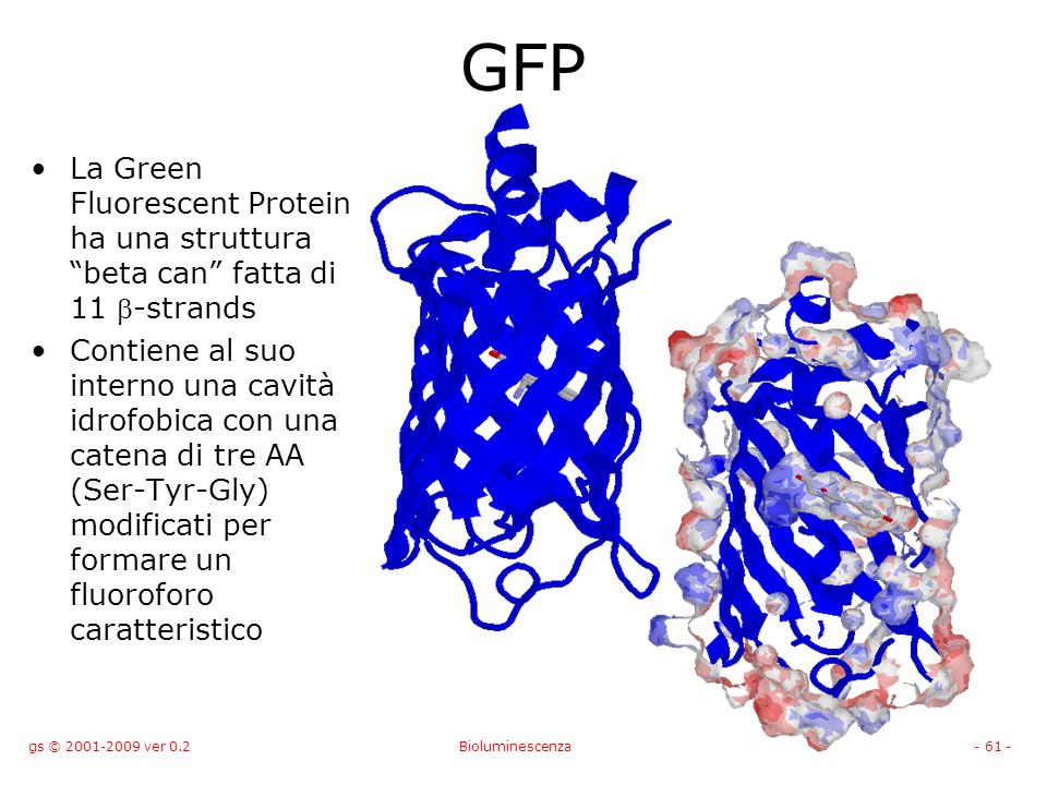 GFP La Green Fluorescent Protein ha una struttura beta can fatta di 11 b-strands.