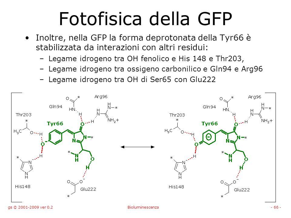Fotofisica della GFP Inoltre, nella GFP la forma deprotonata della Tyr66 è stabilizzata da interazioni con altri residui: