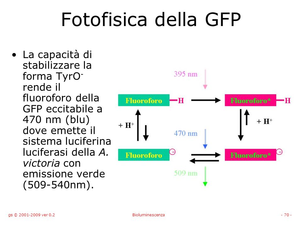 Fotofisica della GFP