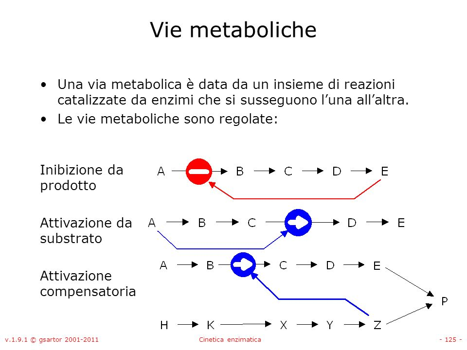 Vie metaboliche Una via metabolica è data da un insieme di reazioni catalizzate da enzimi che si susseguono l'una all'altra.