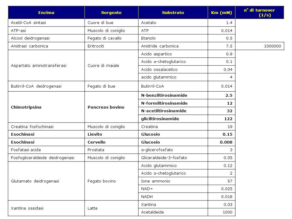 Enzima Sorgente. Substrato. Km (mM) n° di turnover (1/s) Acetil-CoA sintasi. Cuore di bue. Acetato.