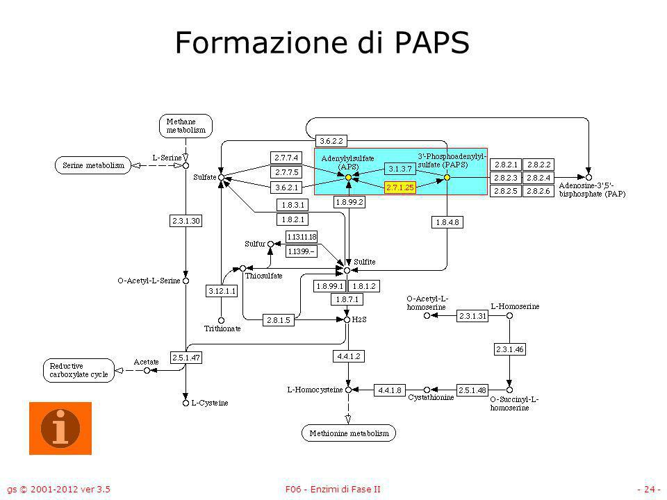 Formazione di PAPS gs © 2001-2012 ver 3.5 F06 - Enzimi di Fase II