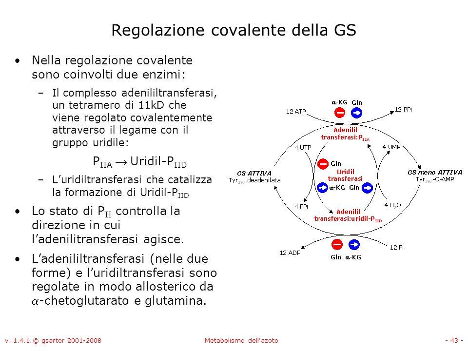 Regolazione covalente della GS