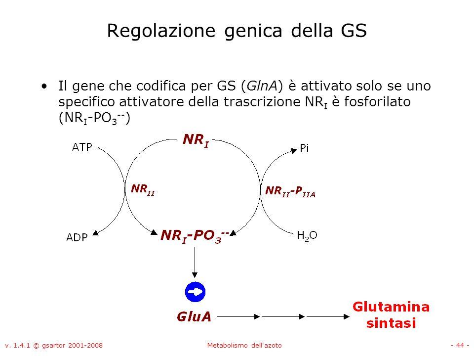 Regolazione genica della GS