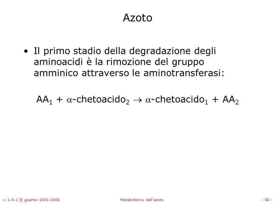 Azoto Il primo stadio della degradazione degli aminoacidi è la rimozione del gruppo amminico attraverso le aminotransferasi: