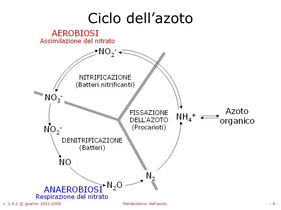 Metabolismo dell azoto