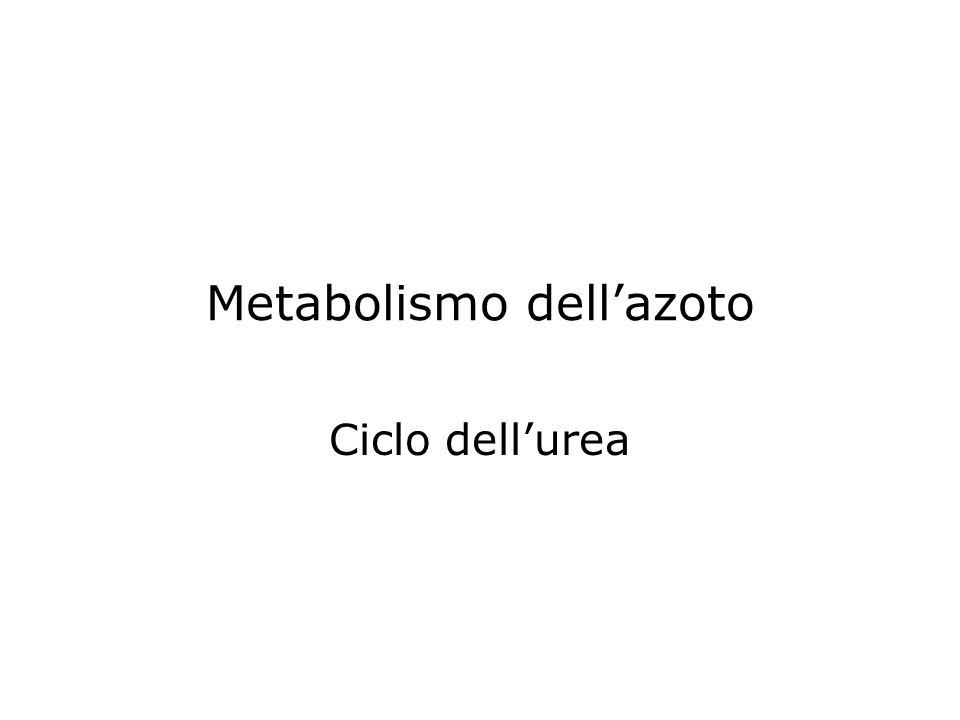 Metabolismo dell'azoto