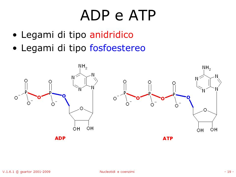 ADP e ATP Legami di tipo anidridico Legami di tipo fosfoestereo