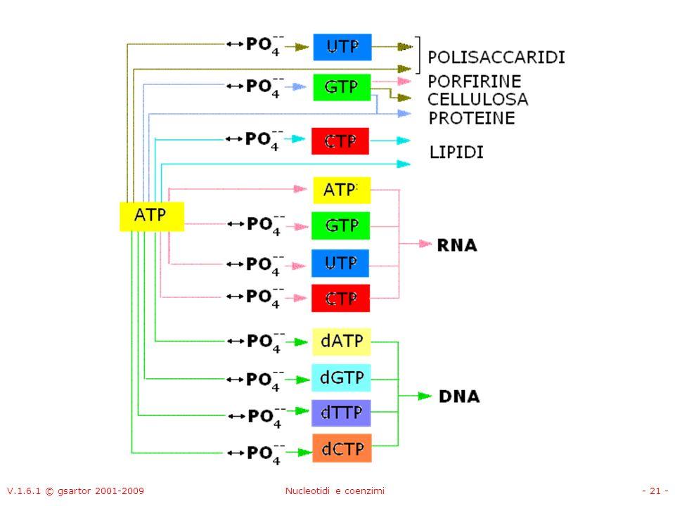 V.1.6.1 © gsartor 2001-2009 Nucleotidi e coenzimi