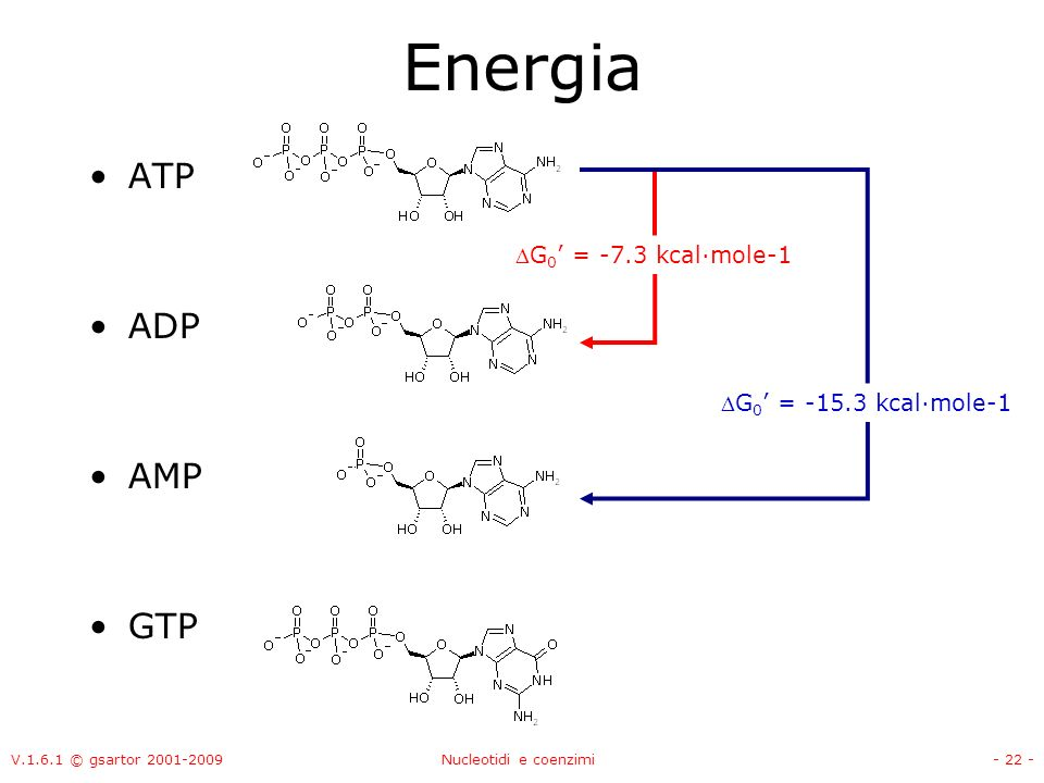 Energia ATP ADP AMP GTP G0' = -7.3 kcal·mole-1