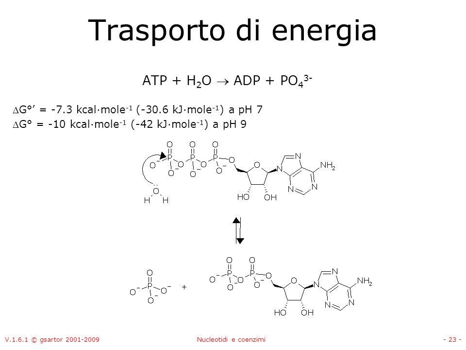 Trasporto di energia ATP + H2O  ADP + PO43-
