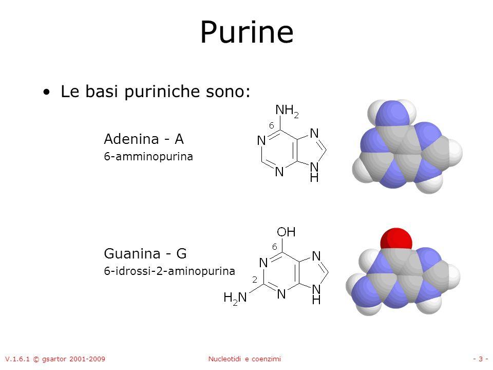 Purine Le basi puriniche sono: Adenina - A Guanina - G 6-amminopurina