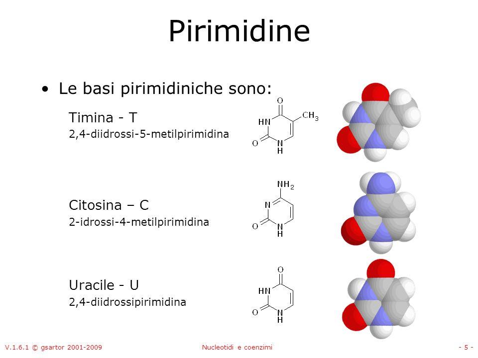 Pirimidine Le basi pirimidiniche sono: Timina - T Citosina – C