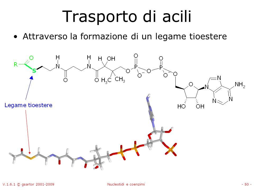 Trasporto di acili Attraverso la formazione di un legame tioestere