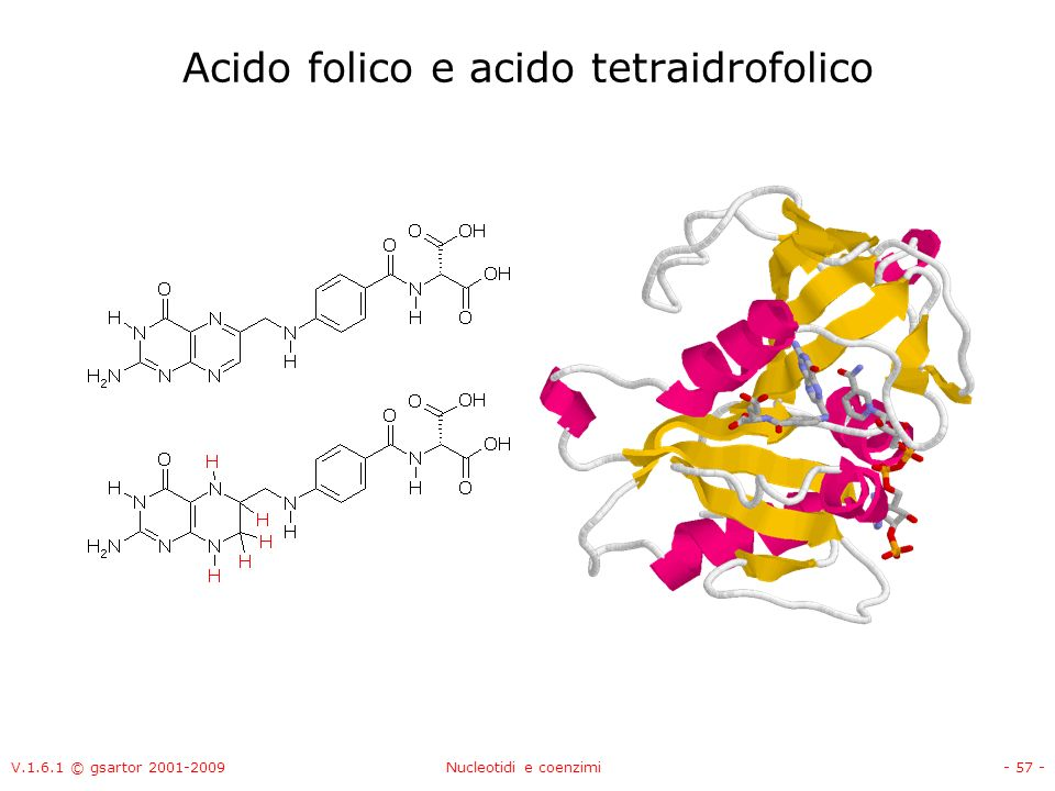 Acido folico e acido tetraidrofolico
