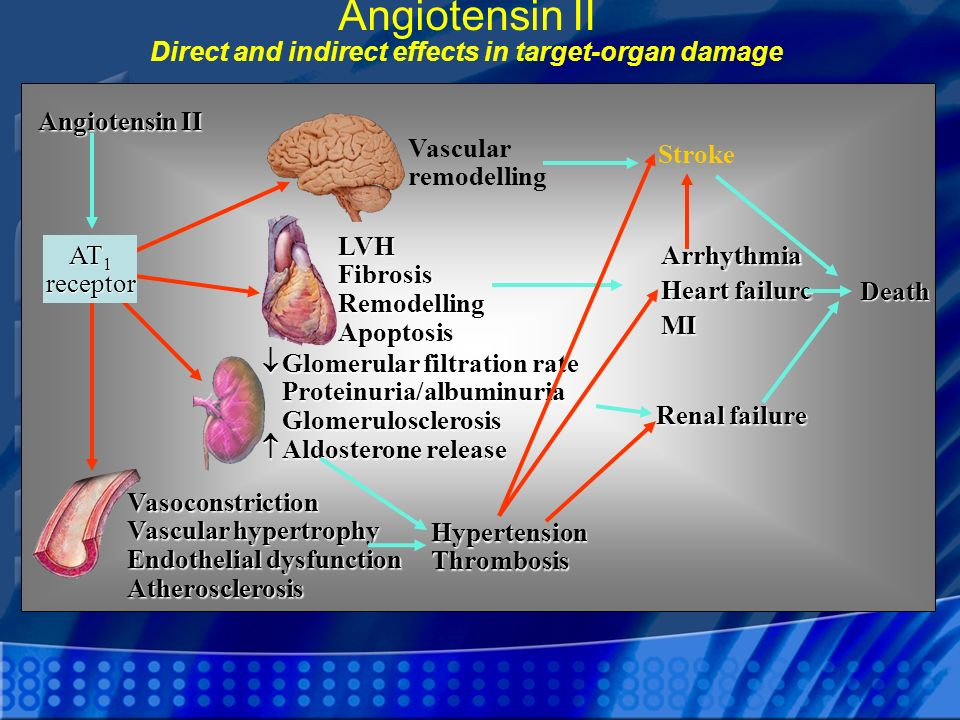 Angiotensin II Direct and indirect effects in target-organ damage