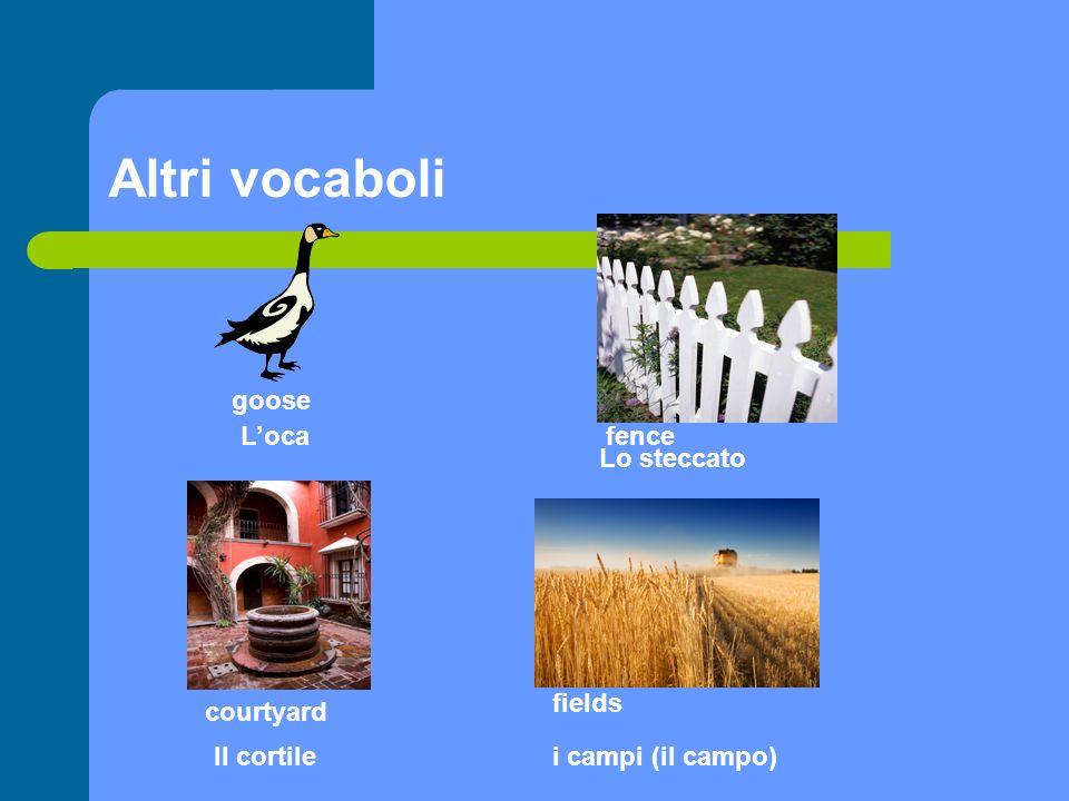 Altri vocaboli goose L'oca fence Lo steccato fields courtyard