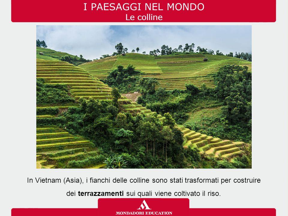 I PAESAGGI NEL MONDO Le colline