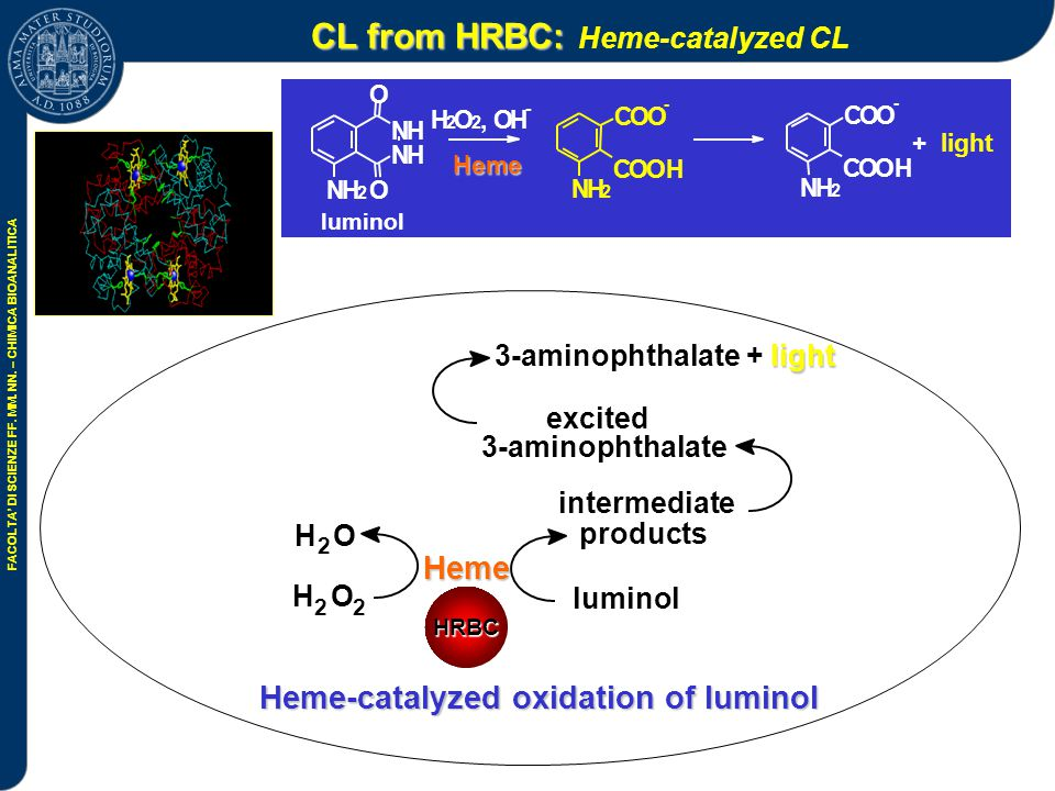 CL from HRBC: Heme-catalyzed CL
