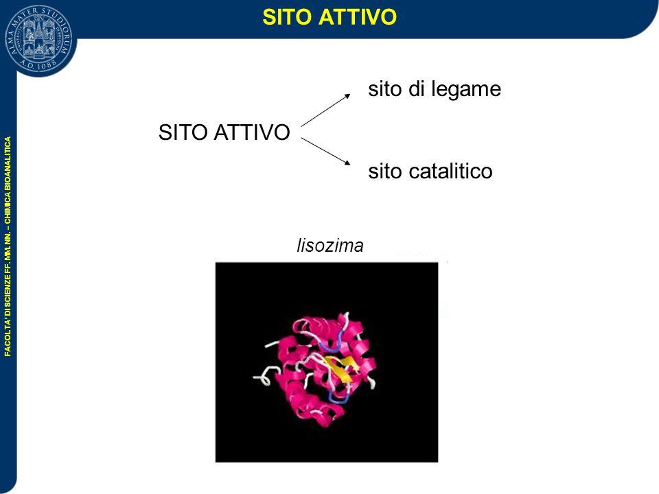 SITO ATTIVO SITO ATTIVO sito di legame sito catalitico lisozima