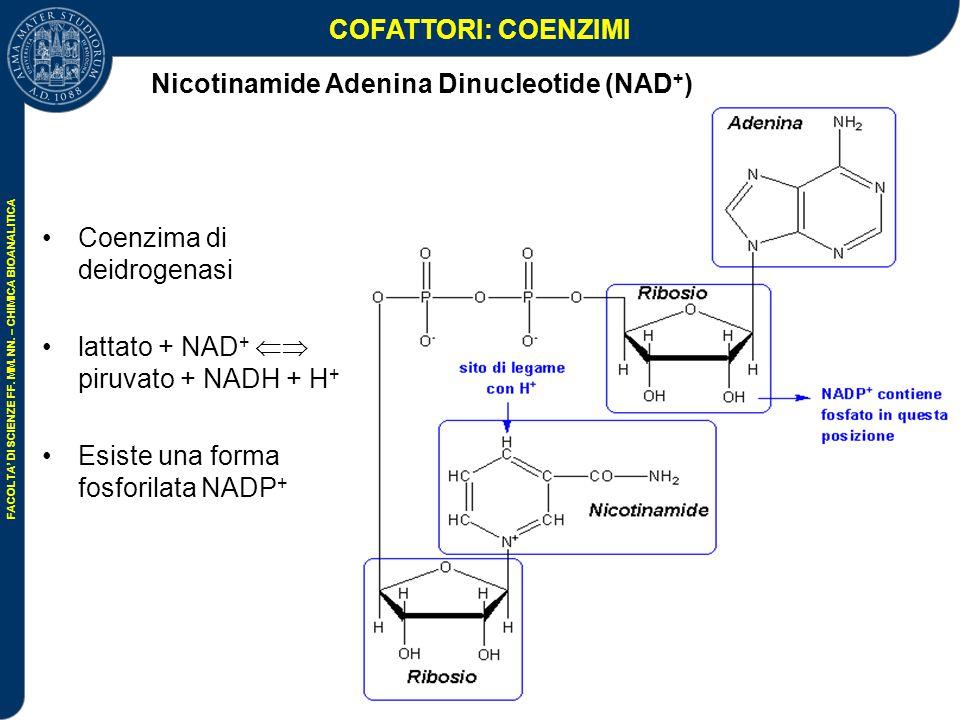 Nicotinamide Adenina Dinucleotide (NAD+)