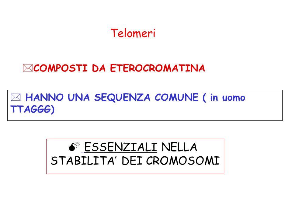 STABILITA' DEI CROMOSOMI