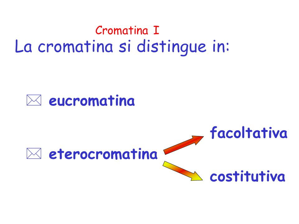 La cromatina si distingue in: