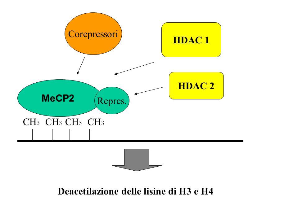 Corepressori HDAC 1 HDAC 2 MeCP2 Repres. CH3 CH3 CH3 CH3 Deacetilazione delle lisine di H3 e H4