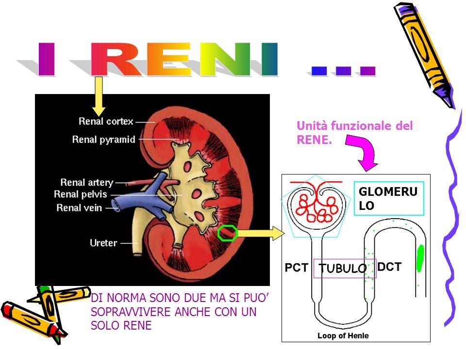 I RENI ... Unità funzionale del RENE. GLOMERULO TUBULO